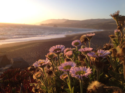 Những bông hoa bên bãi biển.