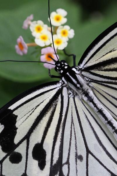 Bức ảnh hoa bướm được chụp từ máy ảnh EOS