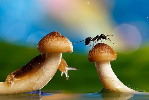 Một bức ảnh trong bộ ảnh Wonderland. Ảnh: Nadav Bagim.