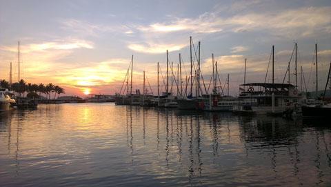 Hoàng hông trên bến cảng.