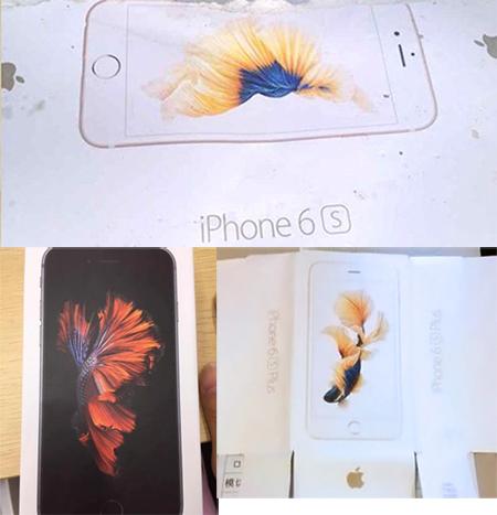 Apple-8-2814-1441781859.jpg