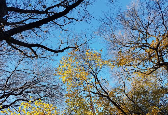 Chụp ảnh mùa thu vàng bằng smartphone