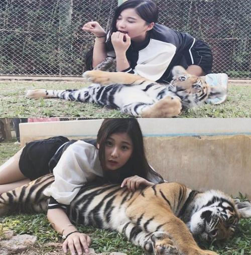 Nữ streamer vào sở thú chơi với hổ.