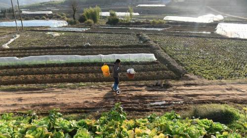 Nông dân Trung Quốc cưỡi xe tự cân bằng đi làm đồng - 1