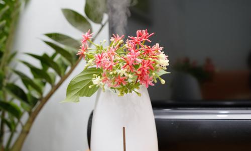 Mipow Vaso máy xông tinh dầu tự bật tắt