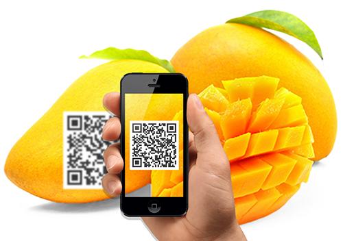 Công nghệ blockchain đã được ứng dụng để truy suất nguồn gốc xoài tại Việt Nam. Ảnh: IBL.