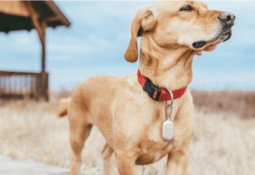 Thiết bị mới của Amazon giúp người dùng quản lý thú cưng. Ảnh: Lifewire.
